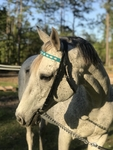 Custom Laced/Padded Browband Race Headstall