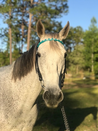 Custom Laced or Padded  Browband
