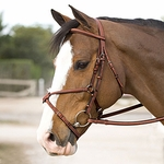 Figure 8 Bridles