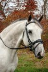 Red Barn Piaffe Bridle