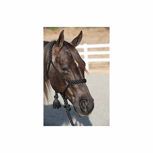 Professionals Choice Cowboy Braided Halter <br>with or without beads