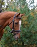 Red Barn Centerline Bridle