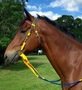 Tack Shack Nylon Race Headstall