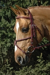 Vespuccci Fancy Raised Figure 8 Bridle