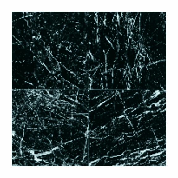 "Daltile Marble 12"" x 12"" China Black Polished"