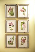 Orchids in Antique Mirror Frames