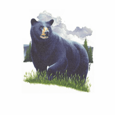 Animal Nature wild Black bear shirt t-shirt