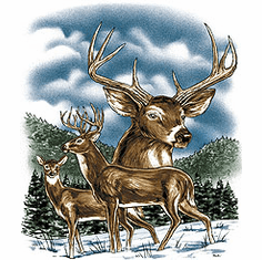 Animal nature wild deer winter snow buck tshirt shirt