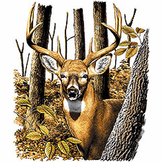 Animal nature wild life buck deer woods tshirt shirt