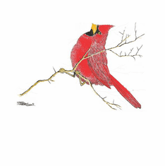 Animal Nature wild red bird cardinal on a branch shirt t-shirt