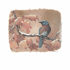 Country Decorative Bird bluebird on a limb tshirt shirt
