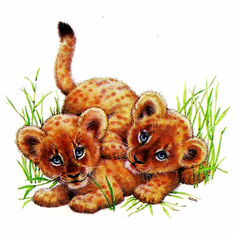 Infant baby toddler kids Nature wild animal tiger cubs