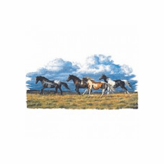 Infant baby toddler kids Nature wild horses