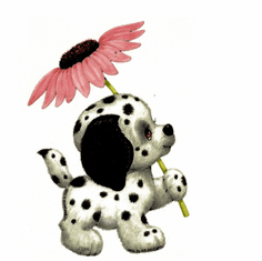 Infant baby toddler kids puppy dog doggy dalmatian with flower