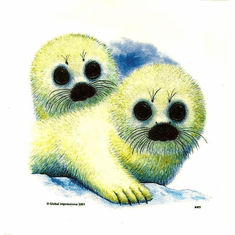 Infant baby toddler kids wild animal seals