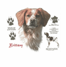 Nature Animal Dog doggy puppy Brittany shirt t-shirt