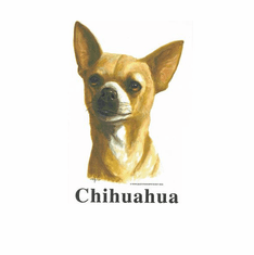 Nature Animal Dog doggy puppy chihuahua shirt t-shirt