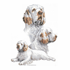 Nature Animal Dog doggy puppy Clumber spaniel shirt t-shirt