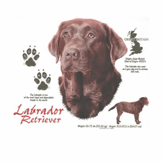 Nature Animal Dog doggy puppy labrador retriever shirt t-shirt
