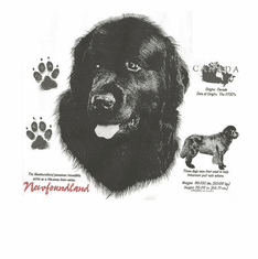 Nature Animal Dog doggy puppy Newfoundland tshirt t-shirt