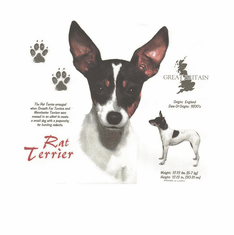 Nature Animal Dog doggy puppy rat terrier shirt t-shirt