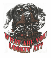novelty shirt attitude What are you looking at dog