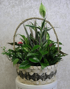 12in Basket Dishgarden PL80