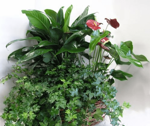 Assorted Plants in Basket