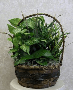 Basket Dishgarden PL70