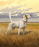 "Setter: ""2x Nat. Ch. Shadow Oak Bo"" - print"
