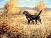 Gordon Setter: The Scotsman - artist proof