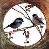 Chatting Chickadees on Berry Bush Metal Wall Art