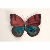 Jeweled Wings Butterfly Metal Wall Art
