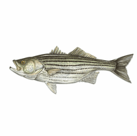 Stripped Bass Fish Wall Art