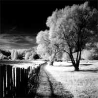 Rollei Black & White Infrared Film