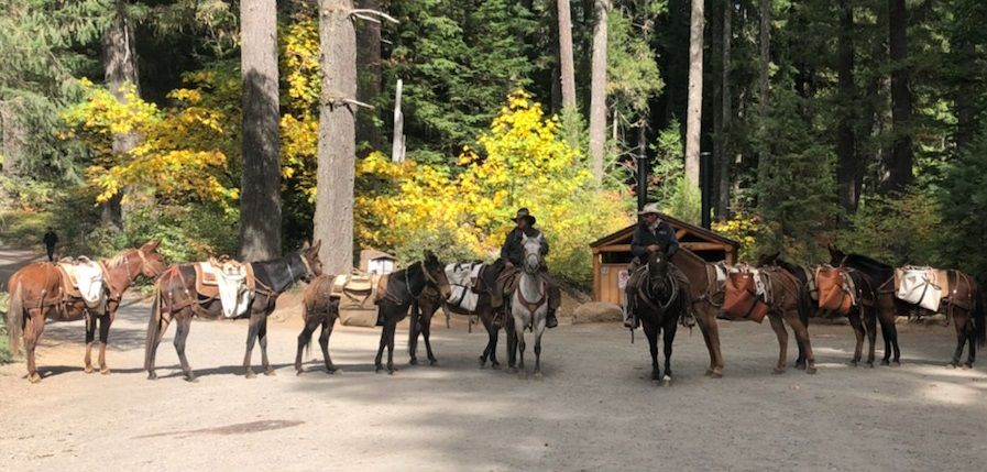Outfitters Pack Station | Pack Saddle & Horse Packing Equipment
