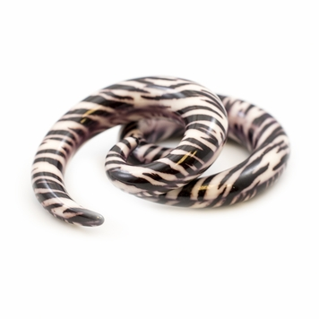 Pair of  Spiral Ear Tapers with Zebra Print Design