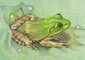 Notecards From Froggy & Toadie© - Individually & In Bulk