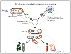 Developing new products using genetic engineering