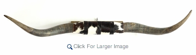 Mounted Longhorn Steer Horns, 44-54 inch span, natural finish, cowhide with some or mostly black hair - Click to enlarge