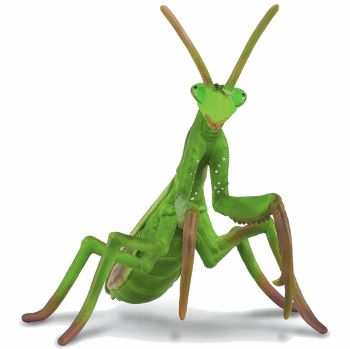 CollectA - Praying Mantis