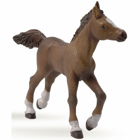 Papo - Anglo-Arab Foal