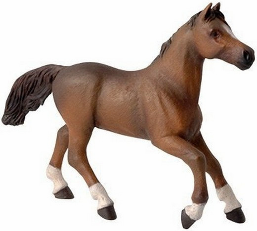 Papo - Anglo-Arab Horse
