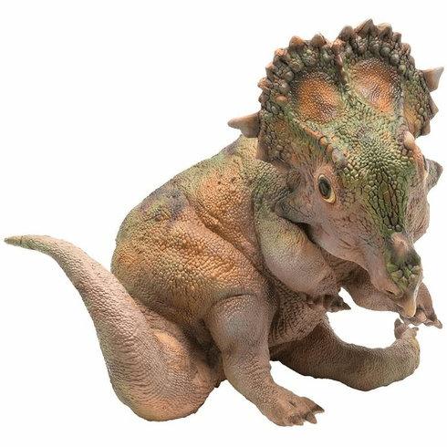 PNSO - A-Qi The Young Sinoceratops