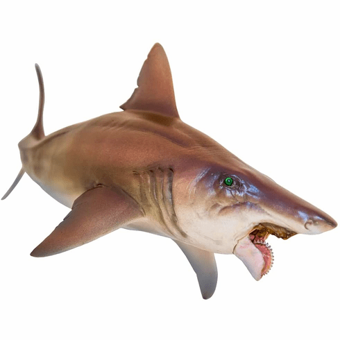 PNSO - Haylee The Helicoprion