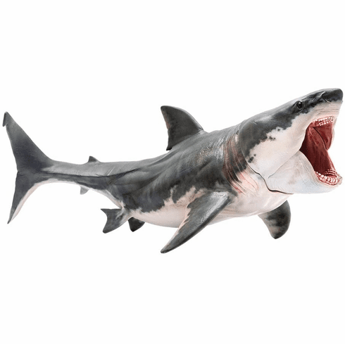 PNSO - Patton The Megalodon