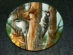 1987 Collector Plate The Downy Woodpecker From Birds of Your Garden Collection