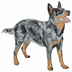 acd004 American Cattle Dog (small or large design)