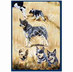 Australian Cattle Dog Playing Cards