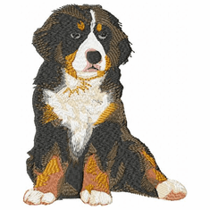 bmd003 Bernese Mountain Dog (small or large design)